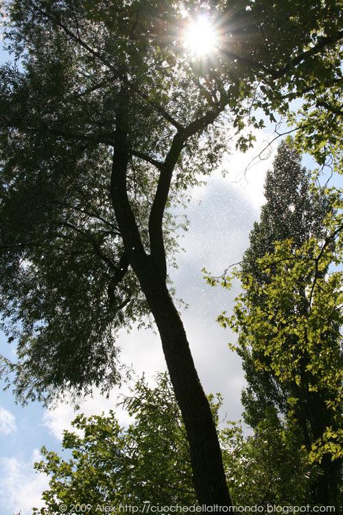 Sole tra gli alberi