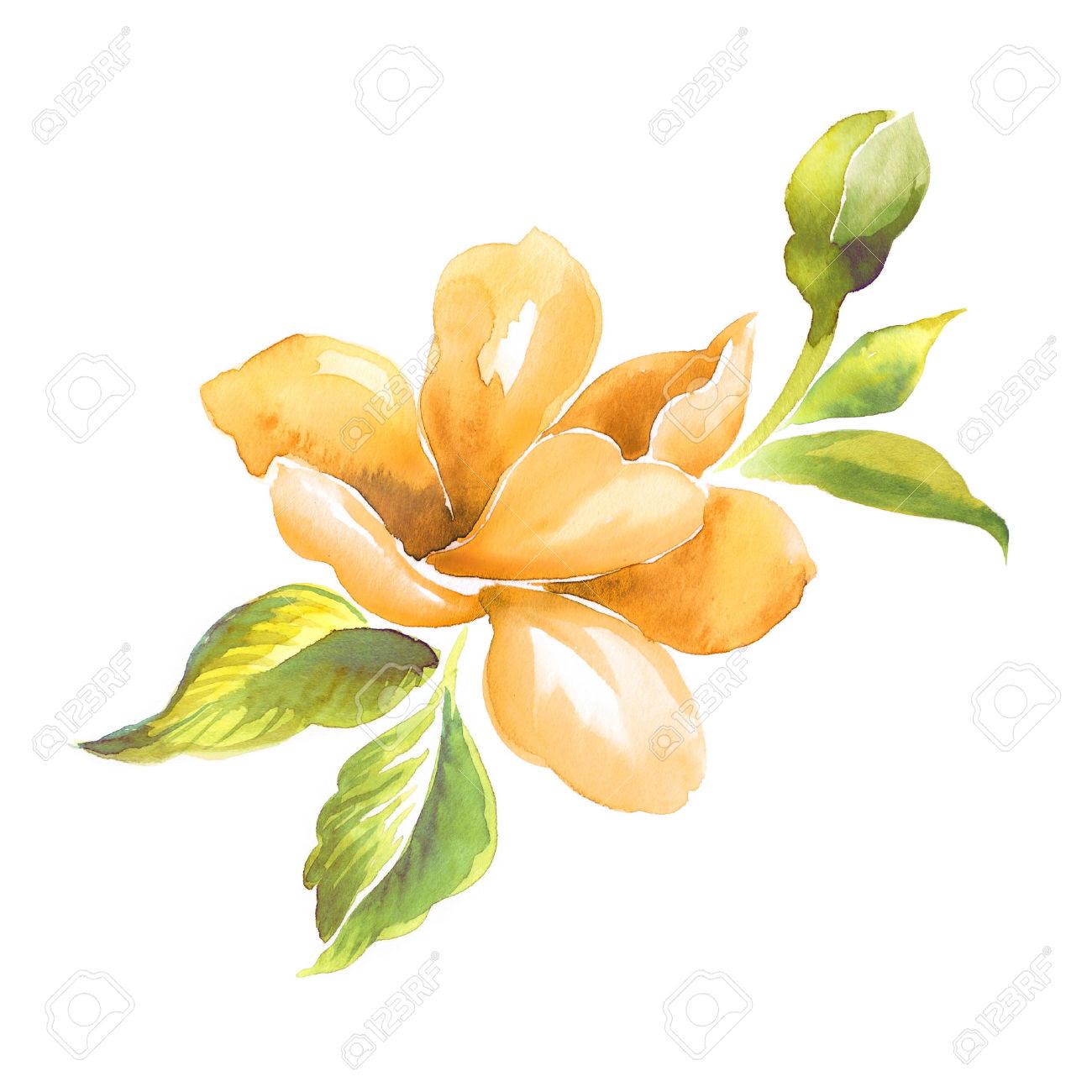 yellow flower illustration 3