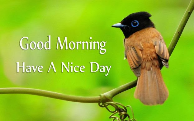 Good Morning Have A Nice Day With Cute Birds Images Good Morning
