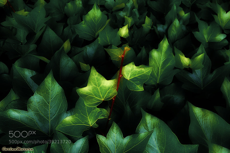 The Green Light / La Luz Verde by Corina Morera (corina_morera)) on 500px.com