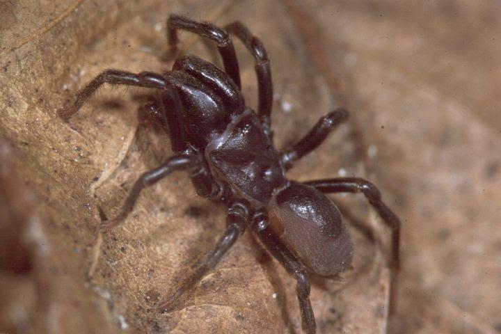 Spider Defensive Stance