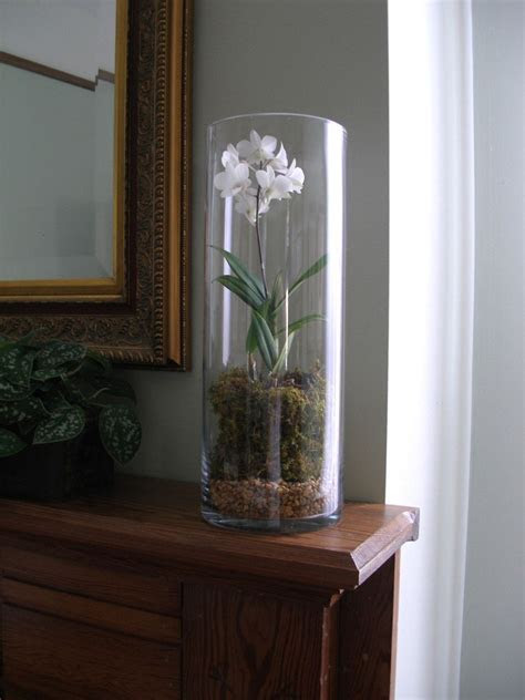 Using Round Cylinder Clear Glass Extra Tall Vase for