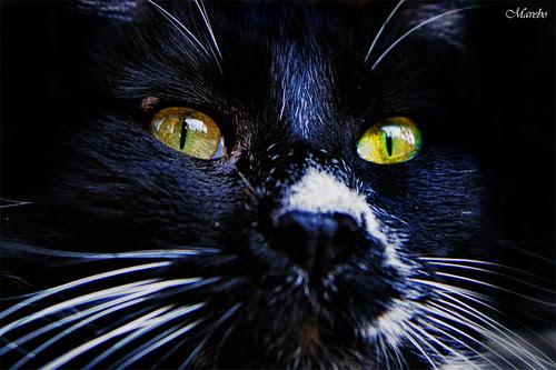 Es famoso gatito negro del mausoleo de los Españoles by Alejandro Bonilla