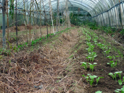 11月末播種の畑