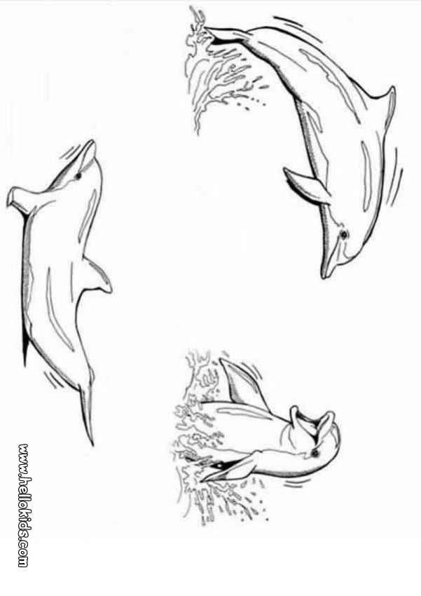 ausmalbilder delfin mandala