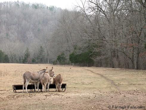 The Daily Donkey 106