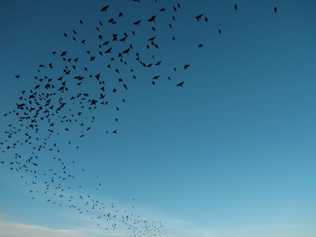 The Flock
