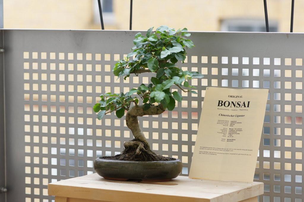 Vorstellung Und Frage Zum Umtopfen Bonsai Forum De