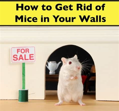 How to Get Rid of Mice in Walls   Victor®