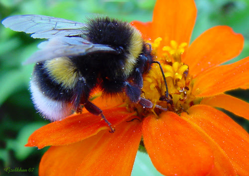 beehaved cropped