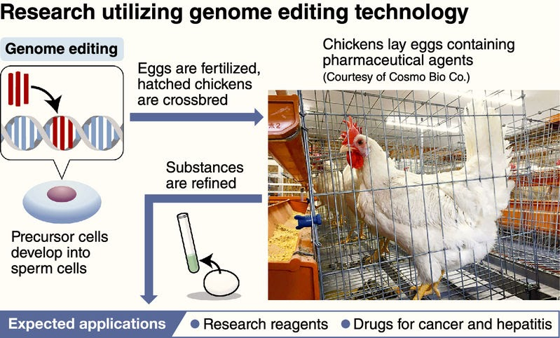 Science And Technology: Genetically Modified Chickens Lay ...
