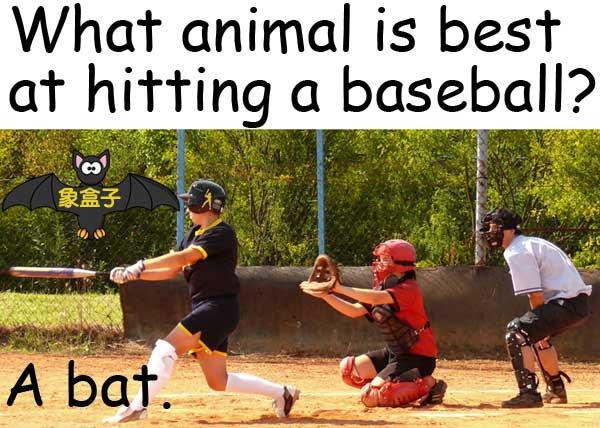 baseball bat 蝙蝠 球棒 棒球棍