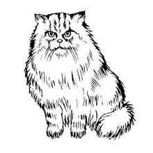 Dibujos Para Colorear Gato Persa Eshellokidscom