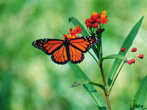 butterfly desktop wallpapers funny  funny mages
