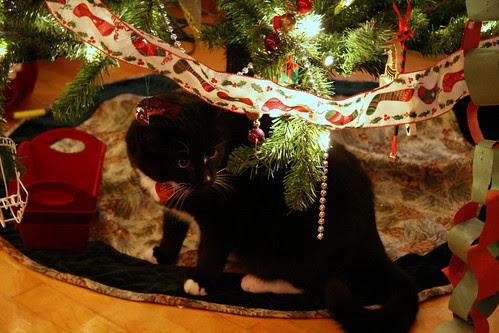 Wysiwyg under the tree
