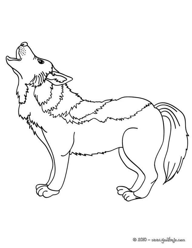 Dibujos Para Colorear Lobo Eshellokidscom