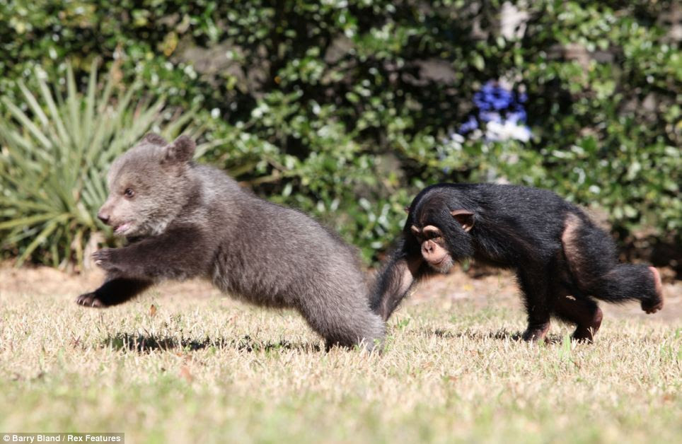 The pair love to play together and have been best of friends since they were introduced