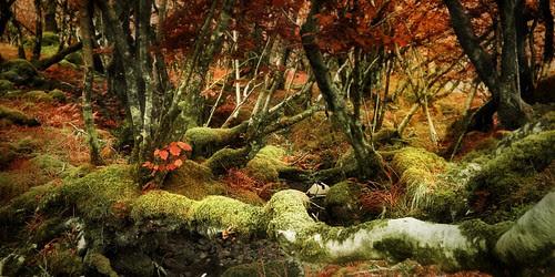 Enchanted Wood por Kevin Day