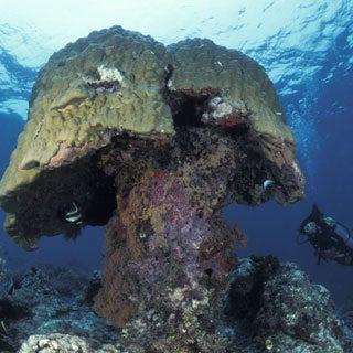 http://www.scientificamerican.com/media/inline/ocean-acidification-hits-great-barrier-reef_1.jpg