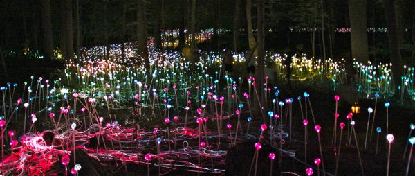 longwood gardens, light show, landscaping