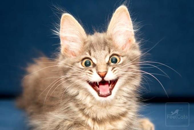 Cómo educar a un gato ( Si quiere y te deja…. )
