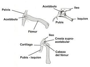 Fuente: Asturnatura.com