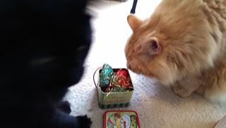 Jasper picking a catnip mouse
