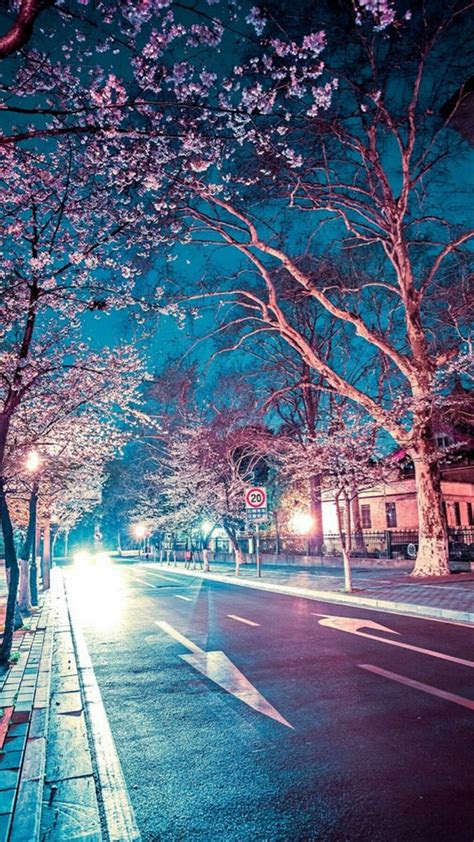 japanese street cherry blossom night scenery iphone