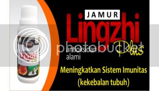 Jamur Lingzhi
