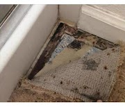 Identification and Treatment of Mold on the Carpet