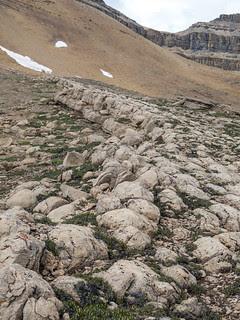 Huge stromatolite reef below Cirque Peak