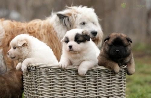 "johnnyslittleanimalblog: ""  photography ~ Adorable Puppies By Juliane Meyer """