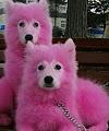 En este complejo turístico tiñen a los perros de rosa y los abandonan sin comida en un bosque