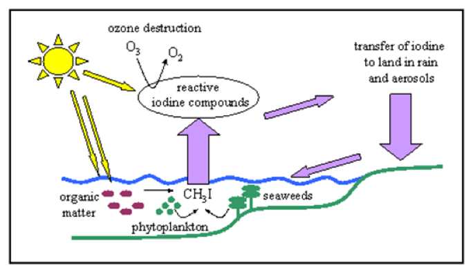 Image result for iodine cycle in nature