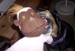 Lola_monkey_7410c