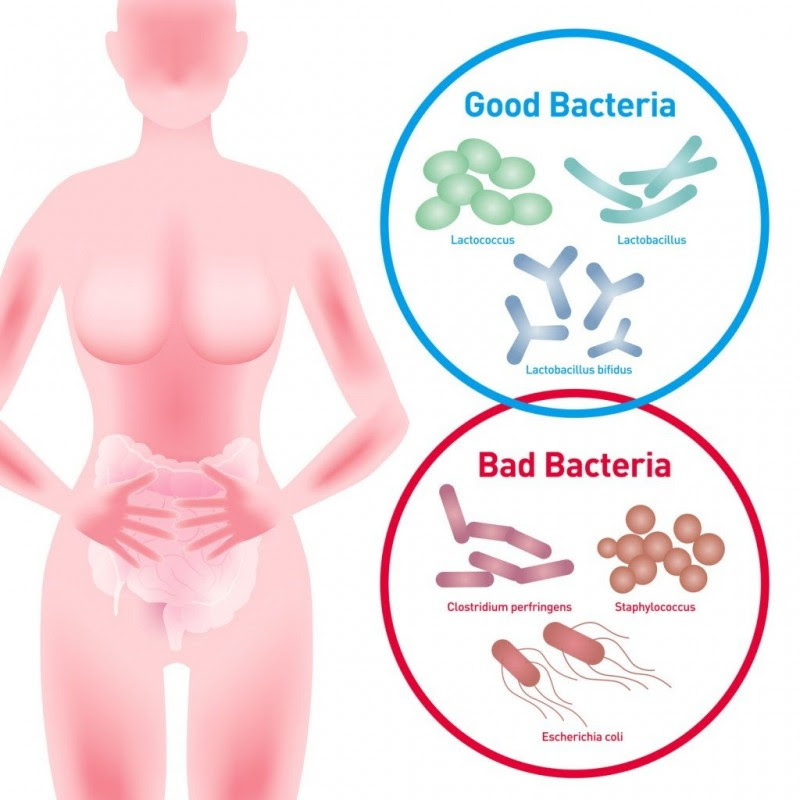 Are Gut Bacteria The Key To Healthy Aging?