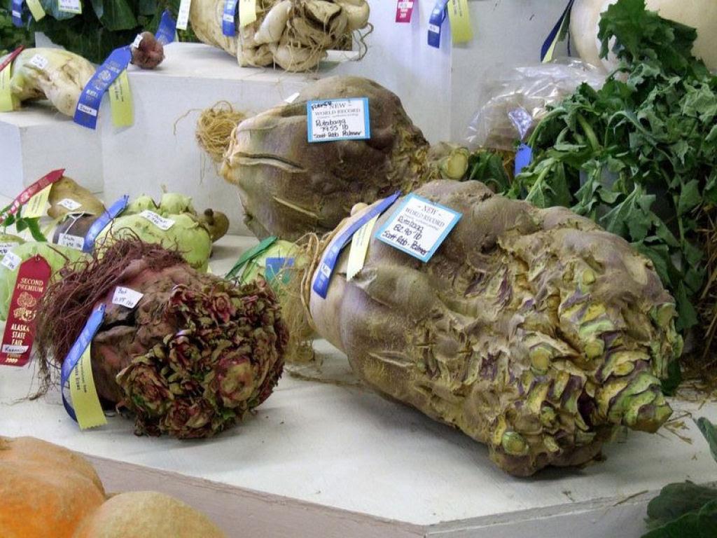 Você sabe por que os vegetais do Alasca são gigantescos? 07