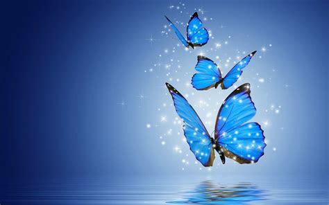 butterfly computer wallpaper wallpapertag