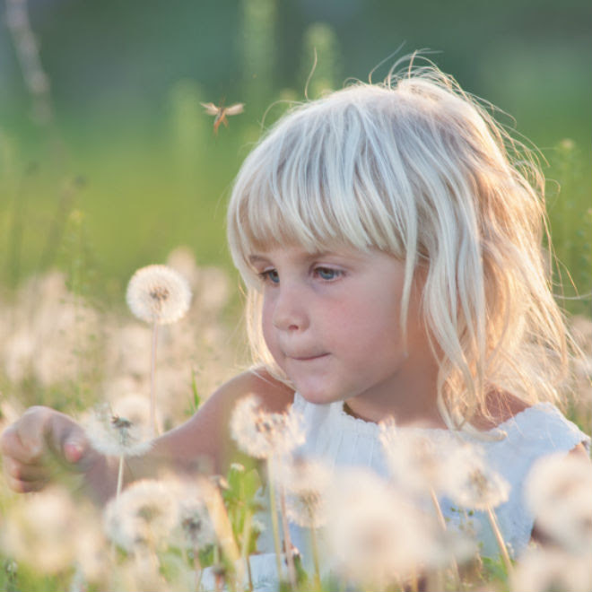 Mosquito Bite Safety Myths And Facts Todays Parent