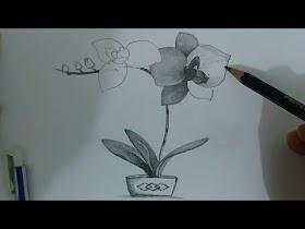 Gambar Pensil Bunga Anggrek
