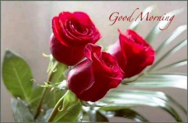 Single Red Rose Image Good Morning Floweryred2com