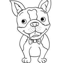 Dibujos Para Colorear Cachorro Caniche Eshellokidscom