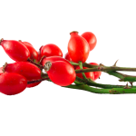 Herb-Hedgerow-Rosehips