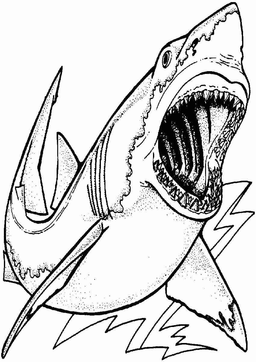 Megalodon Shark Coloring Pages at GetColorings.com | Free ...