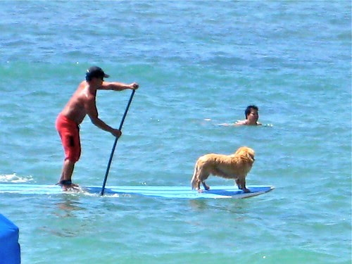 surfing dog, Waikiki