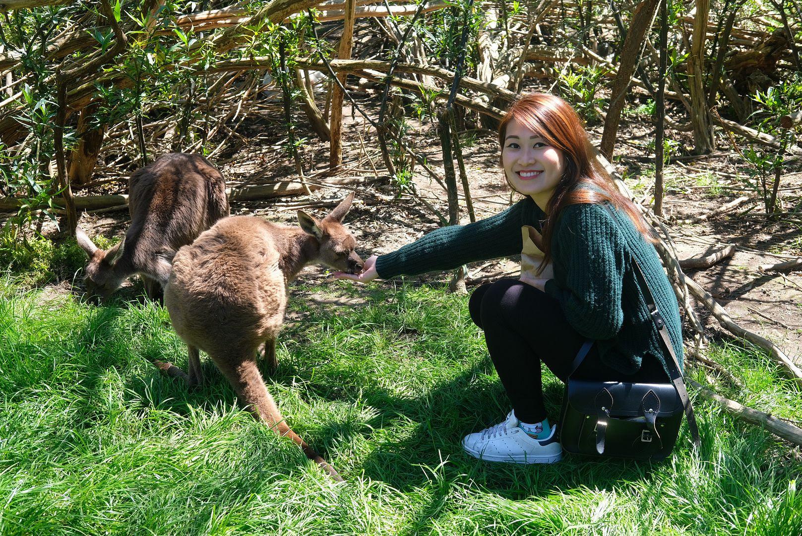 photo gorge wildlife park south  australia.jpg