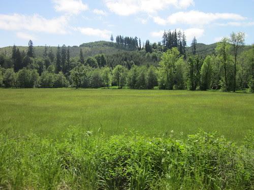 Meadow near Vernonia on Timber Rd