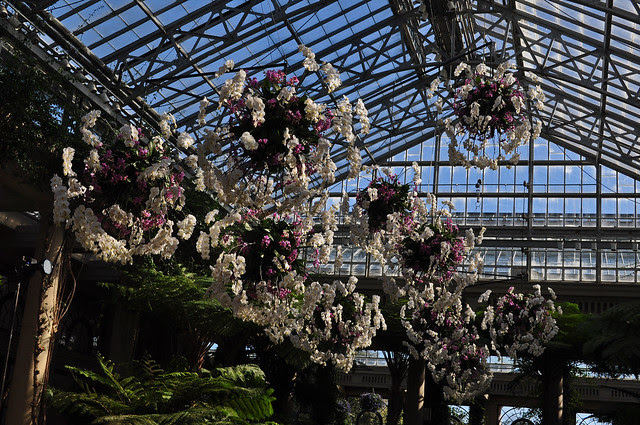 Hanging Orchid Balls (Exhibition Hall)