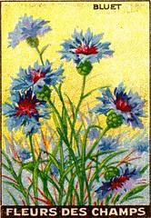fleurs des champs 3