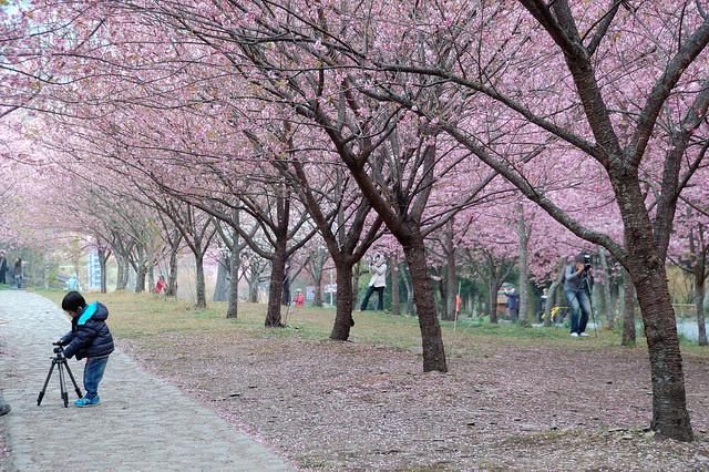 2011.02.26 台中 / 武陵農場